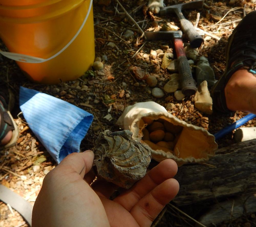 Figure 3: Concretion collecting spoils in Knappton, WA.