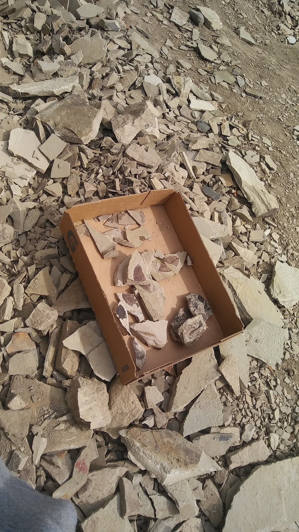Figure 5: Collection box of assorted and fragmented finds.
