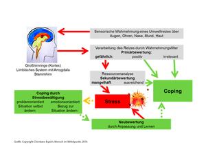 Coping – mit dem Stress umgehen lernen