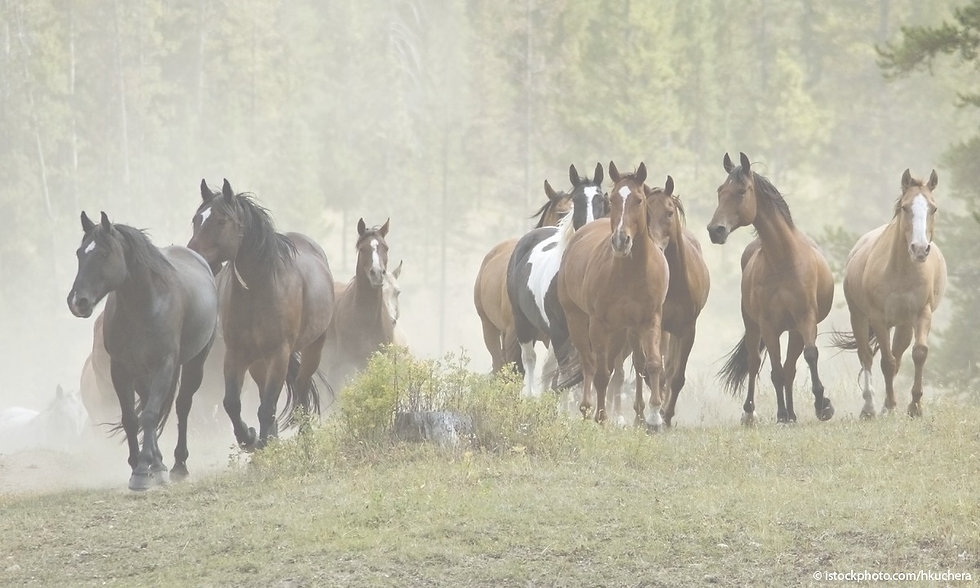 Saddlebreds2_edited.jpg