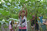野菜の収穫体験3.JPG