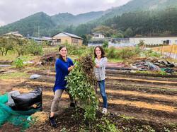 野菜の収穫(落花生)