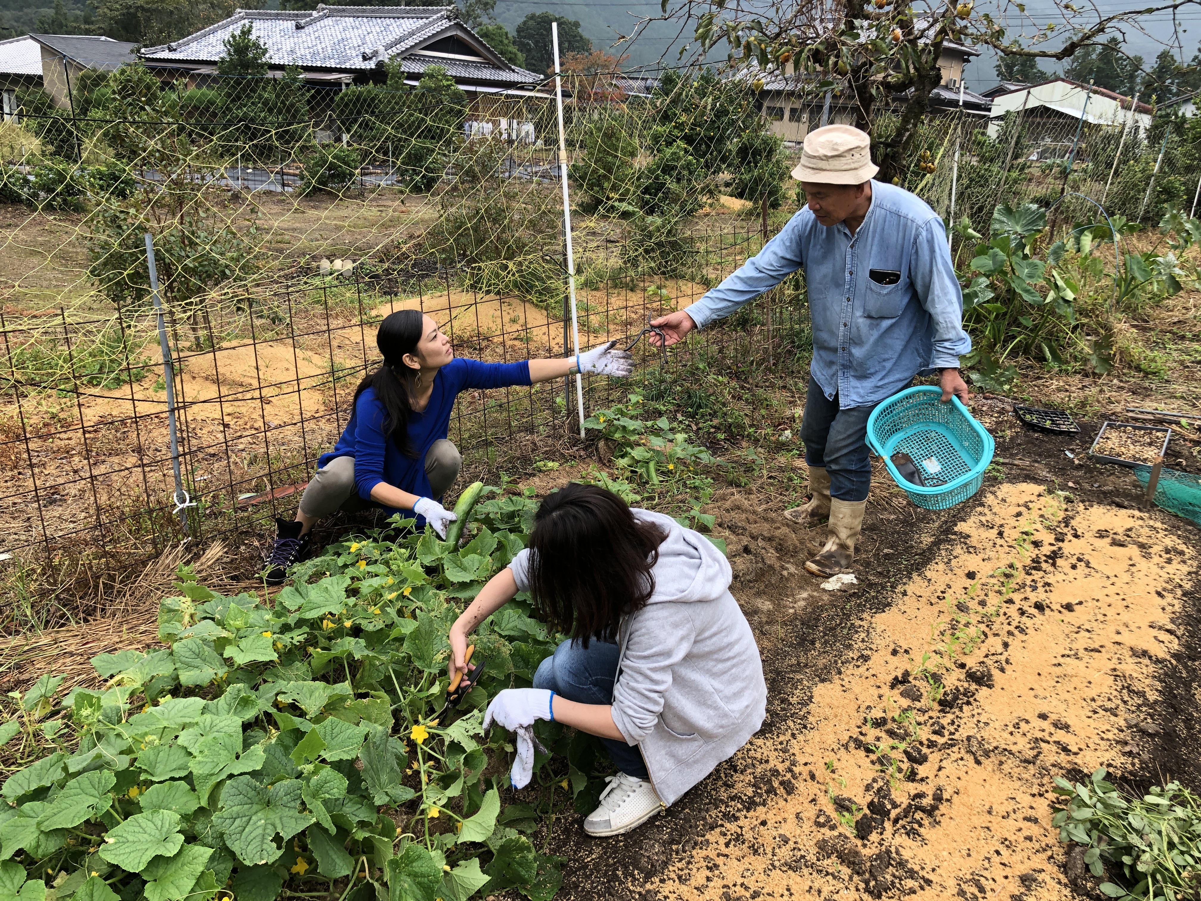 野菜の収穫体験2