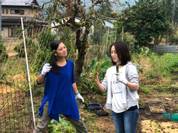 野菜の収穫体験