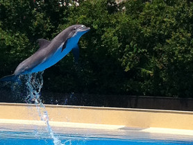 Why I won't buy a ticket to swim with the dolphins