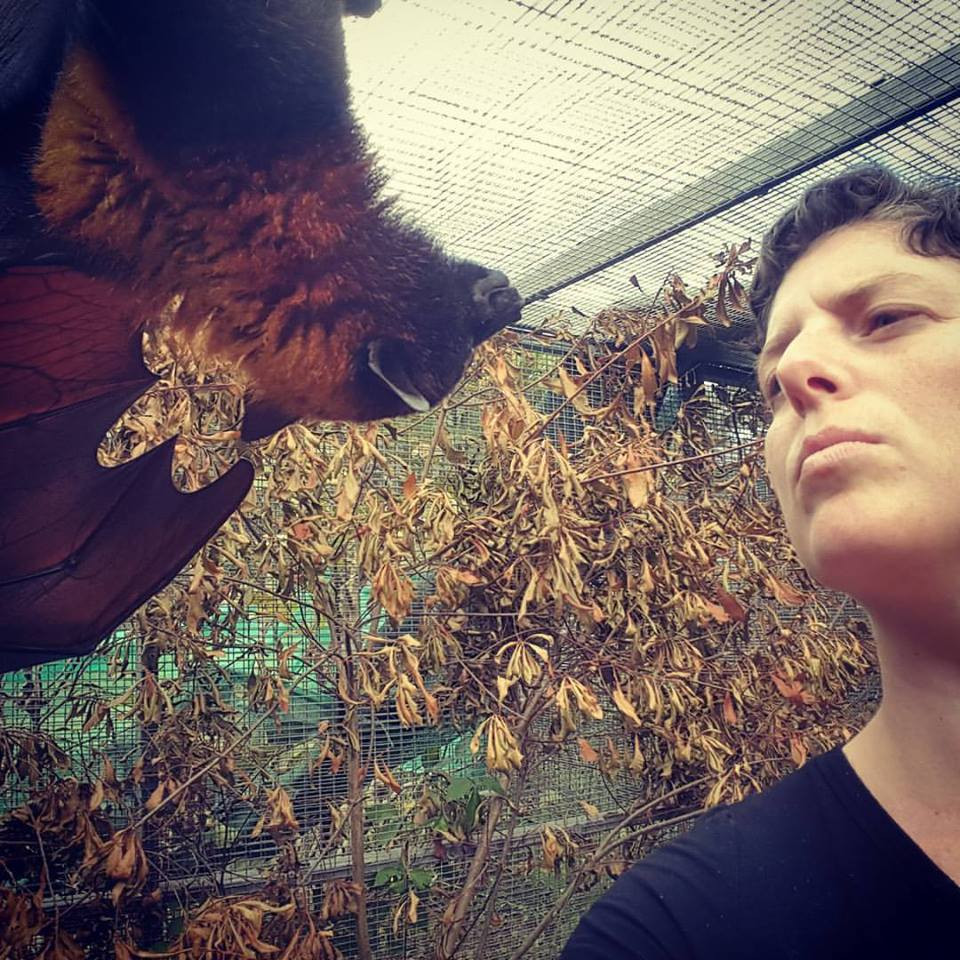 Face to face with fruit bats