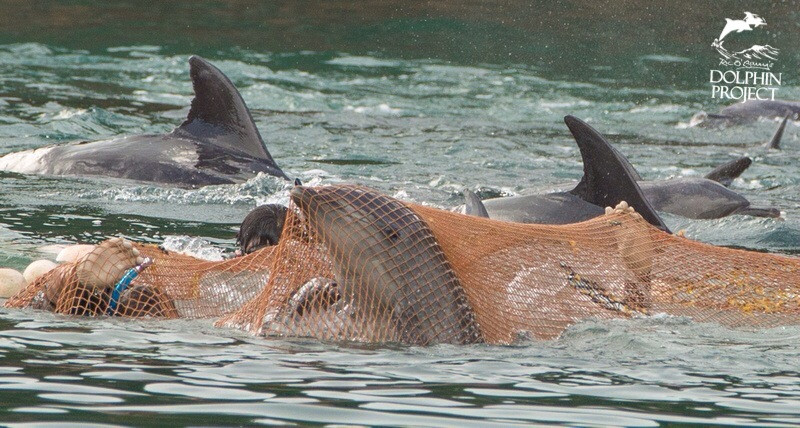 Photo Courtesy of the Dolphin Project
