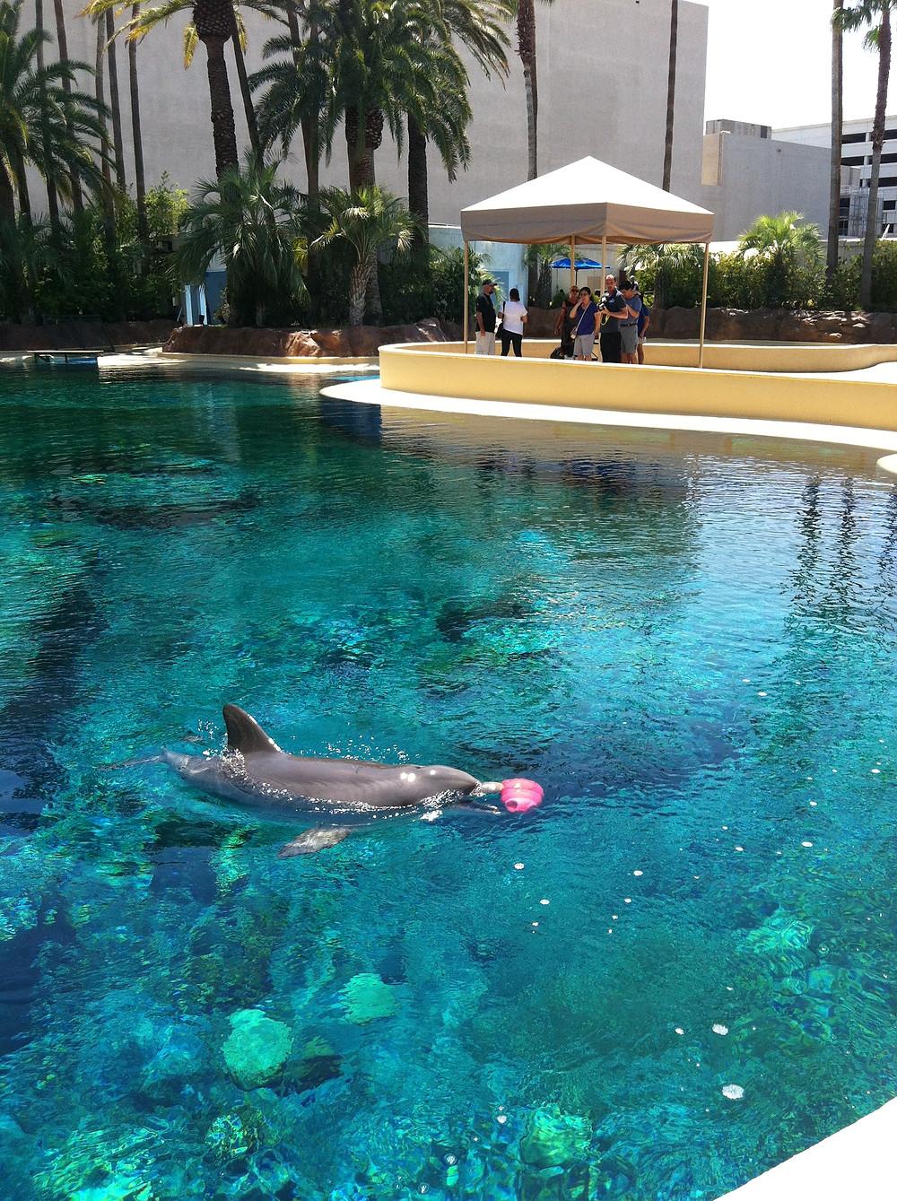 Photo taken at the Mirage Hotel (by: Samantha Sullivan)