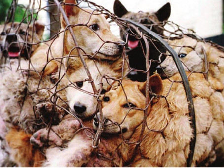 Plea for granting 'Legal Entity' to Animals: What does it really mean?