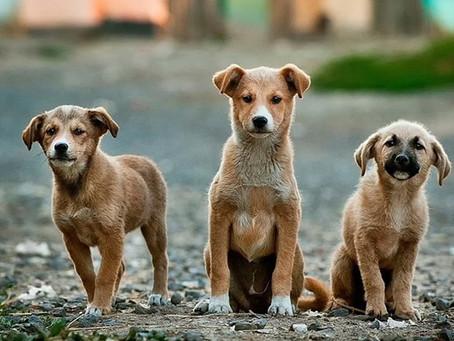 Supreme Court agrees to hear plea seeking to declare animal kingdom as 'legal entity'.