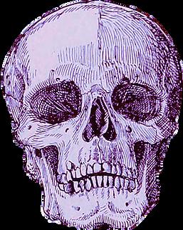 skull icon purple.png