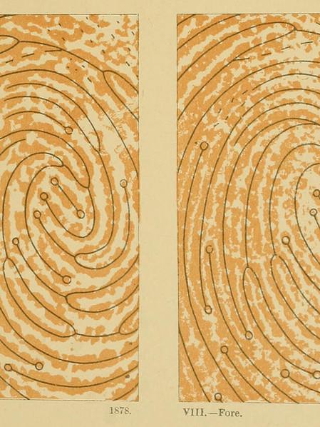 Galton Finger Prints