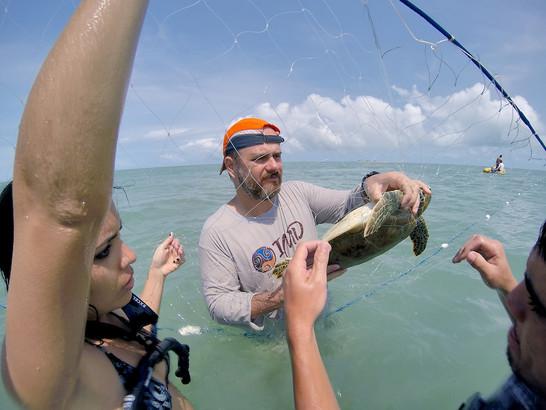 Captura de tartaruga marinha