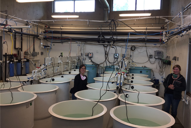 VIU Deep Bay Marine Field Station's larval tank system.  This system has been used for development of an oyster selective breeding program to examine the genetic basis for resilience to a range of environmental stressors including OA, warming and Vibrio spp.