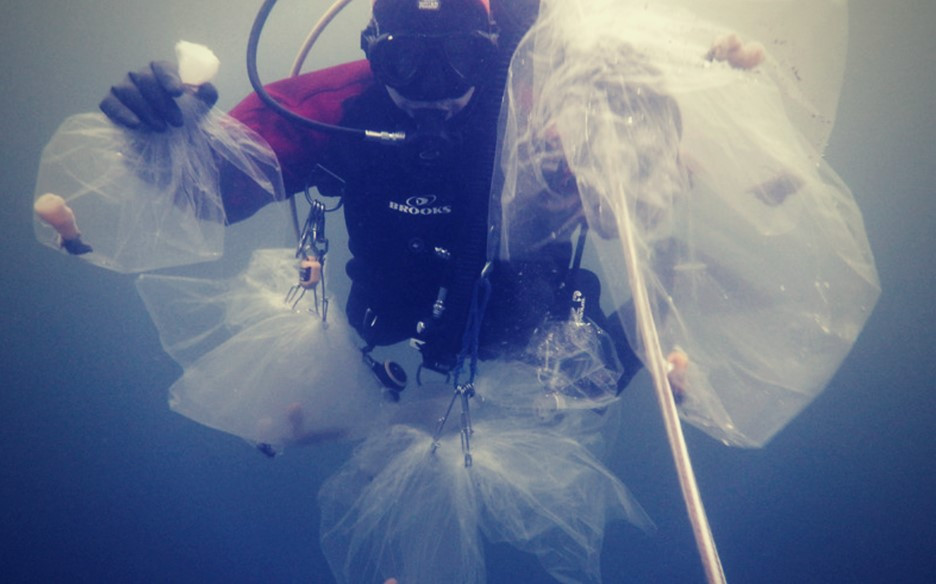 Underwater image of a diver holding several bags with glass sponges