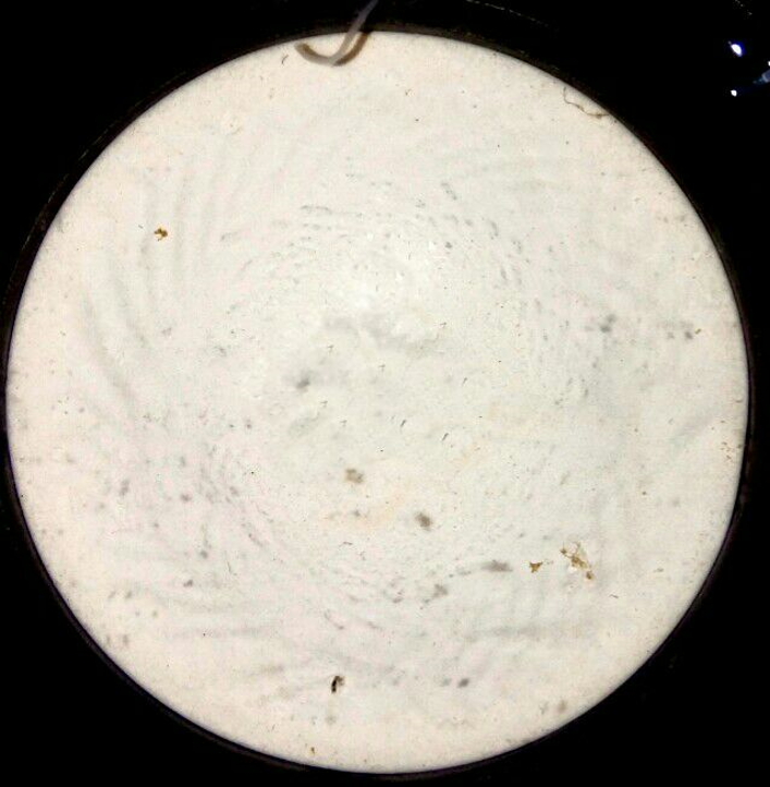 disk of synthetic white sediment containing calcium carbonates, placed in a reactor that is filled with natural seawater