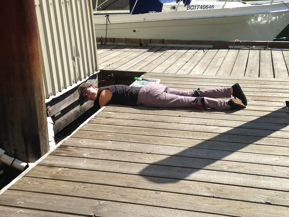 A person lying on their belly on a dock turns to smile at the camera. They are in the middle of checking on their experiment with their arms over the side of the dock.