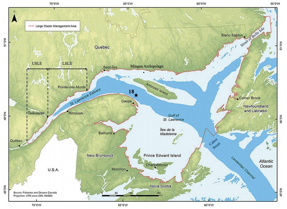 Map of the St. Lawrence Estuary and Gulf. The location of sampling site in this study, Station 18, is noted with the star.