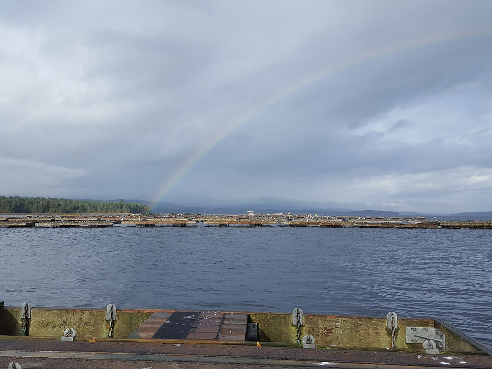 View of Baynes Sound from a dock. Water in the forefront with shoreline in the background and a rainbow in the sky