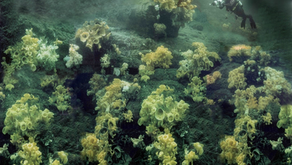 New paper: Warming and acidification threaten glass sponge pumping and reef formation