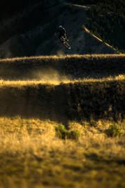 rollers-sunset.jpg