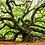 Thumbnail: Wisdom Tree Medicine Jar Candle