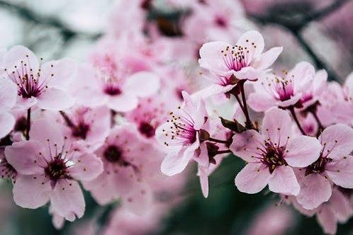Springtime Sakura Medicine Jar Candle