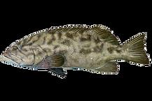 grouper-endless-summer.png