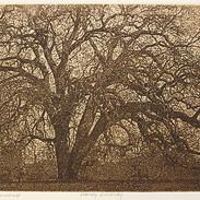 Corrales-Cottonwood-5x8-siz.jpg