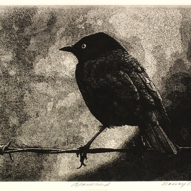 Blackbird 5.5 x 8.JPG