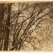 Frosted-Branches-8x10.jpg