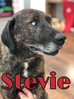 ** ADOPTED**  Stevie - the blind dog who sees with his heart