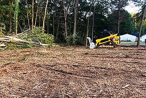 Marshland Land Clearing.jpg