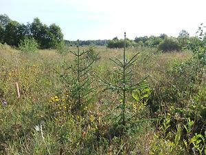 Overgrowth Field.jpg