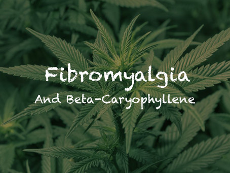 Fibromyalgia and Beta-Caryophyllene