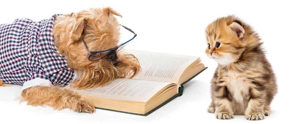 dog-reading-to-cat.jpg