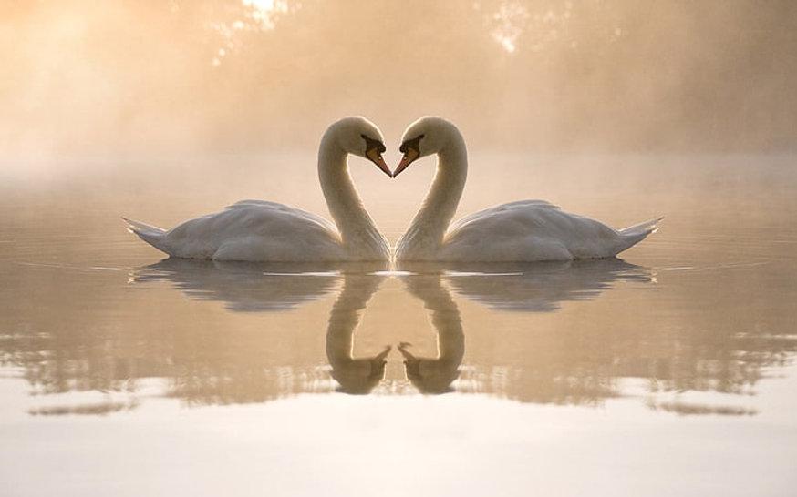 swans-lake-love-heart-wallpaper-preview.jpg