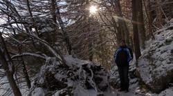 Am Süd-Ufer durch den Wald