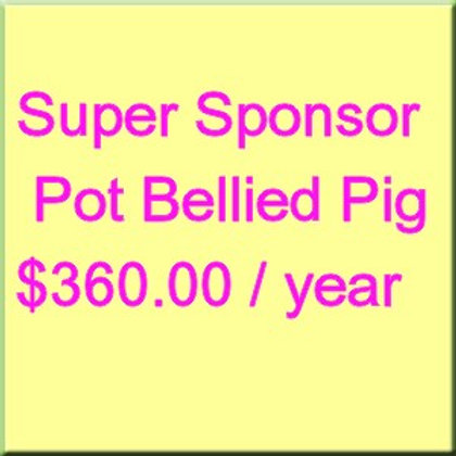 Annual Sponsorship Pot Bellied Pig