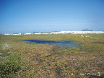 Formação-herbácea-em-baixios-inundáveis-