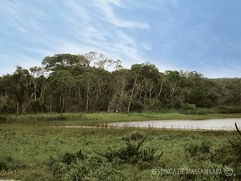 Formação-florestal-inundável-im.png