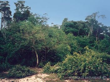 Formação-florestal-não-inundável-im.png