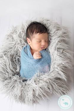 Baby Boy Newborn in grey fur