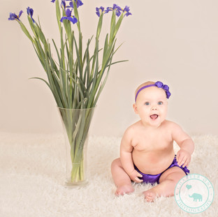 Sitter Baby Photography North Sydney Flowers