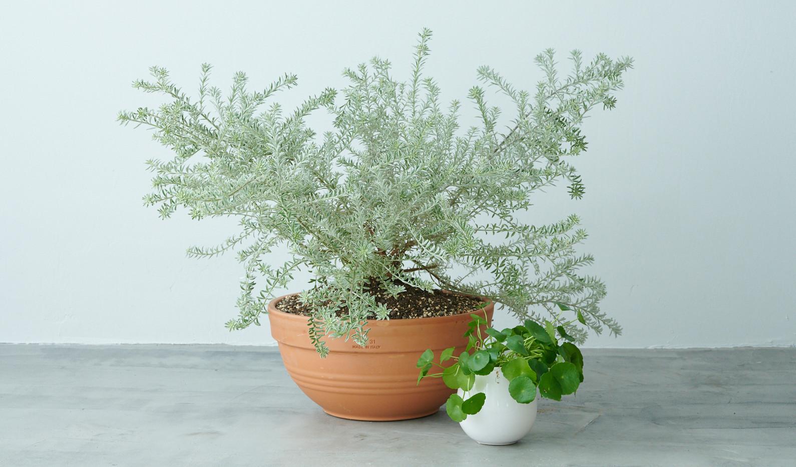 観葉植物追加