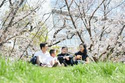家族写真 出張撮影(桜)