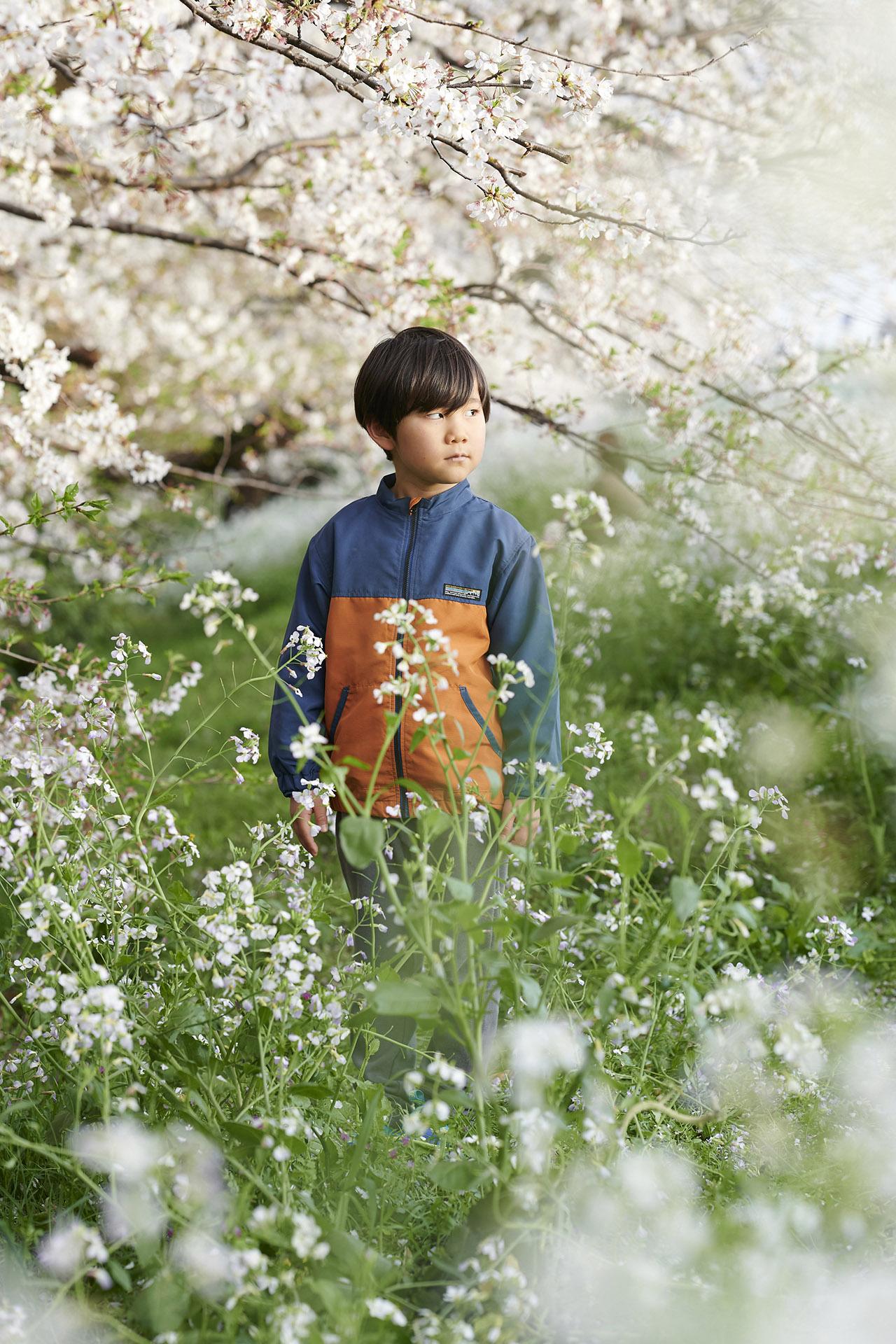 出張撮影(桜)