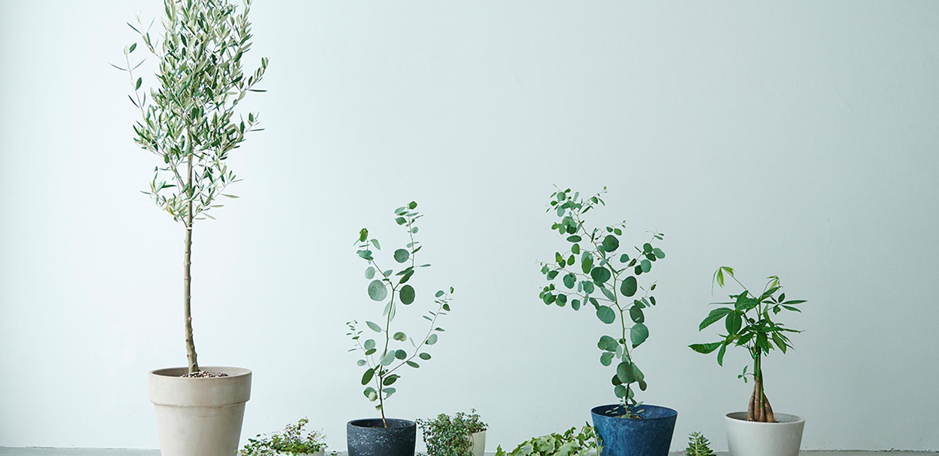 観葉植物。増えたり減ったりします。