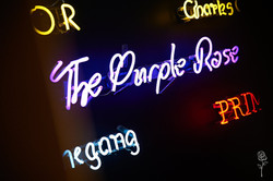 PurpleRose_018.jpg