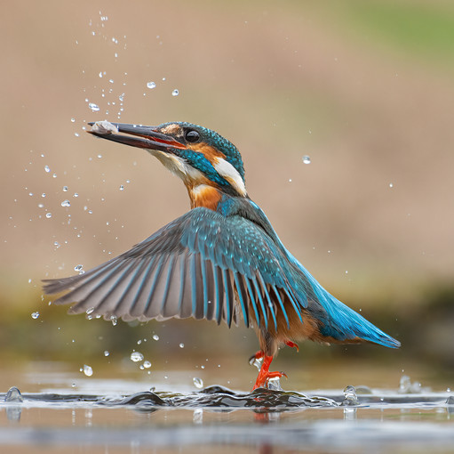 'Catch Of The Day' by Valerie McKee - 5th Place